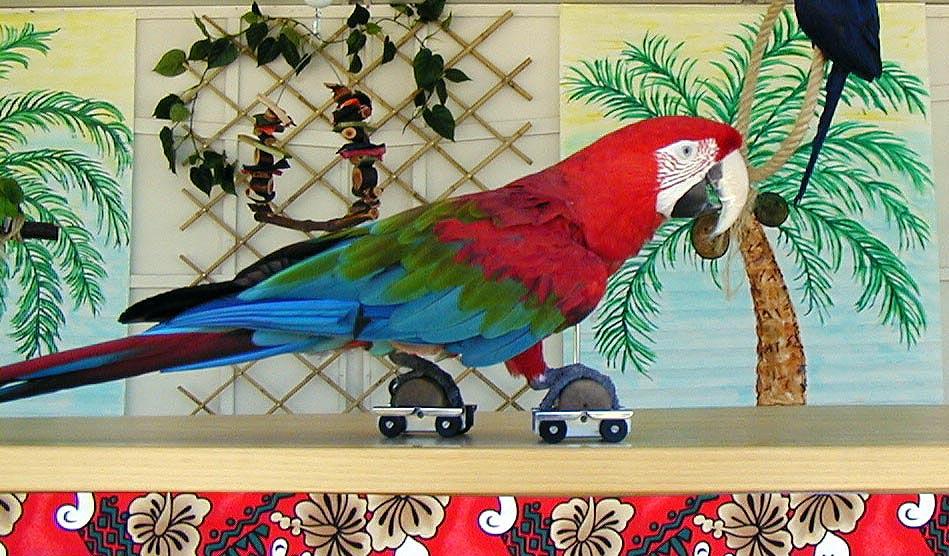 Bird Show 1 - Inspire Productions